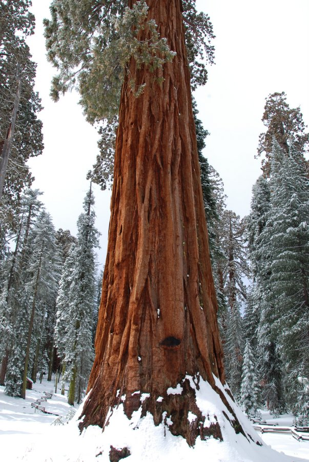 Sequoia-Yosemite-DeGrazio-Dec2013