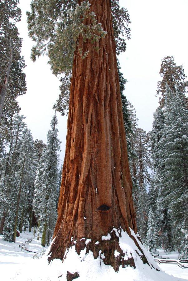 Sequoia-Yosemite-DeGrazio-Dec2013