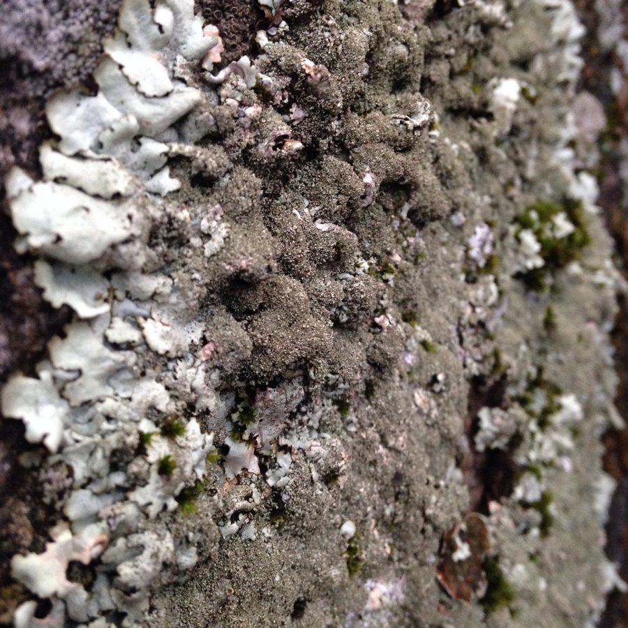 Yosemite-Lichen-YExplore-DeGrazio-iPhone-Jan2014