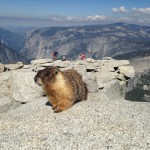 May 2015 Yosemite Instagram Month in Review